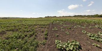 Продам земельный участок в Новоалександровке (со стороны 12-го квартала)